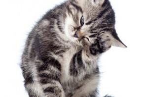 gratis Katzenfoto