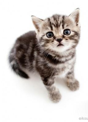 Bild vom Katzenbaby