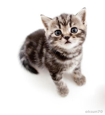 Set Wallpaper Cat Or Kitten