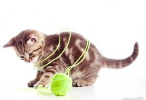 süßes Katzenfoto