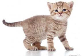 schönes Katzenfoto