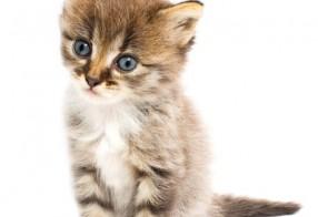 Foto von süßer Katze