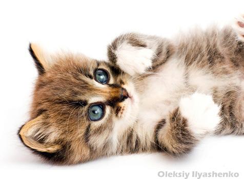 so eine will ich haben viele s e katzenbilder und katzenfotos kostenlos. Black Bedroom Furniture Sets. Home Design Ideas