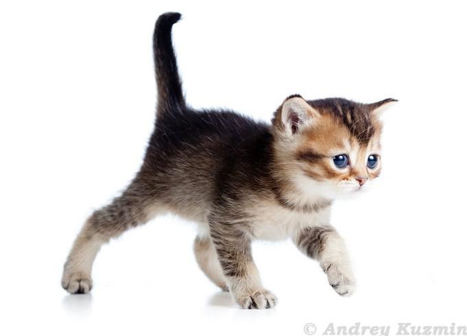 Das Katzenbaby kann kaum stehen