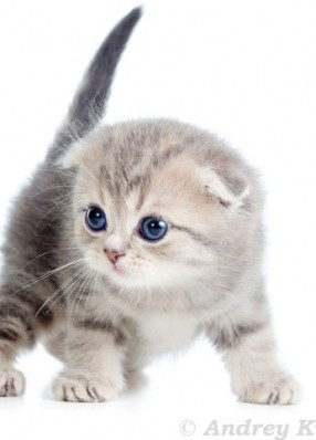 super Katzenfoto