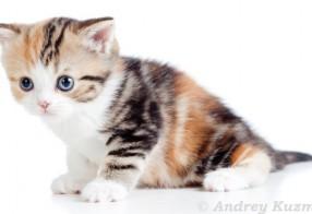 Eine Katze zum knuddeln