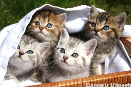 noch ein niedliches katzenbild viele s e katzenbilder und katzenfotos kostenlos. Black Bedroom Furniture Sets. Home Design Ideas