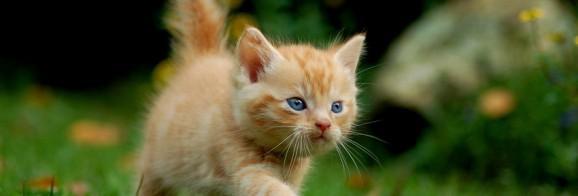 Katze läuft über den Rasen - einfach nur süß