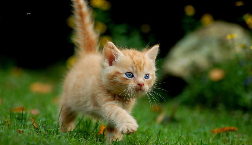 süßes Katzenbild