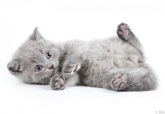 Katzenbild zum ausdrucken