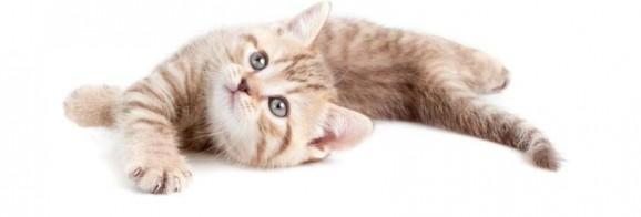 kostenloses Katzenbild