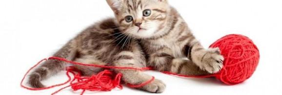 kostenloses Katzenfoto