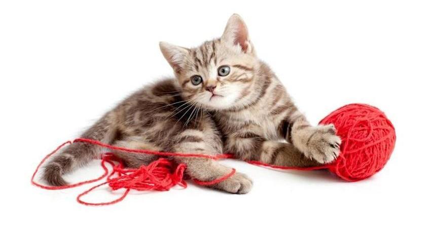 Kitty verhäddert sich